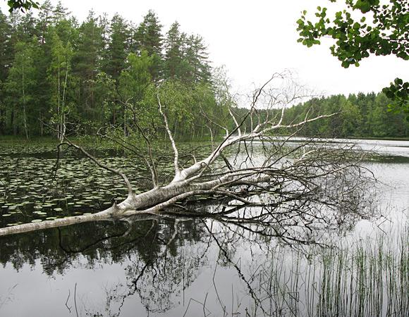 フィンランド ヌークシオ国立公園